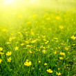 Field of spring flowers — Stockfoto #4608344