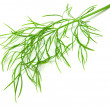 Dill isolated on white background - 图库照片