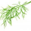 Dill isolated on white background — Stock fotografie