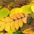 Autumn leaves background — Stockfoto #4608516