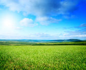 Field of summer green grass — Stock Photo