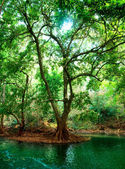 River in deep forest — Stock Photo
