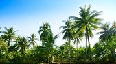 Jungle Thajsko — Stock fotografie