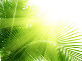 Leaves of palm and morning light — Stock Photo