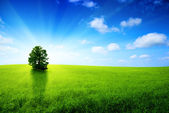 One tree and sun — Stock Photo