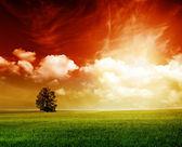 夏緑コードギアス反逆のルルーシュのフィールド — ストック写真