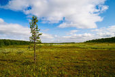 Tundra of north Russia — Stock Photo