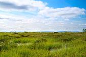 Północy góry tundra — Zdjęcie stockowe