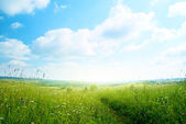 Field of grass and vilage — Stock Photo