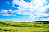 Summer landscape field of green grass — Stock Photo