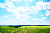 Rollo de un campo de heno cosechado hierba — Foto de Stock