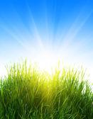 Herbe et le soleil — Photo