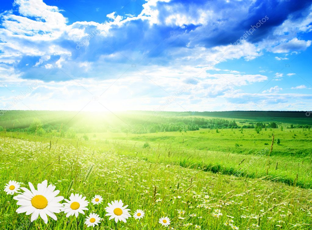 Field of daisies and perfect sky — Stock Photo #4607908