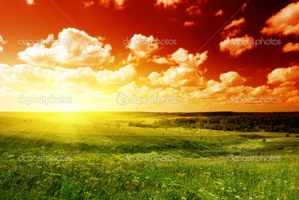 Summer landscape field of green grass and sunset — Stock Photo #4607966