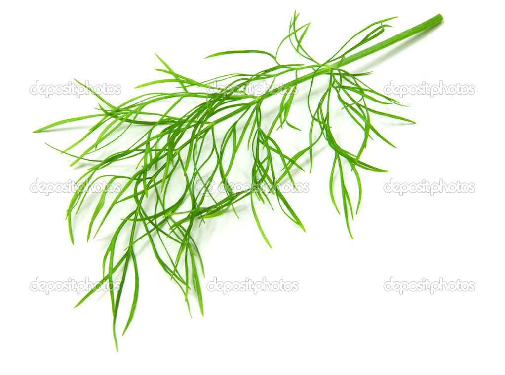 Dill isolated on white background — Stock Photo #4608393