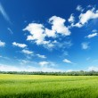 Stock Photo: Oat field and sunny sky