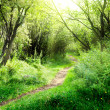 Way in deep forest — Stock Photo #4621695