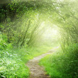 Royalty-Free Stock Photo: Way in deep forest