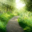 Way in deep forest — Stock Photo #4621799