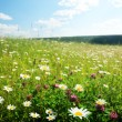 Field of wild flowers — Stock Photo #4621980