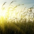 Grass and sunset — Stock Photo #4621983