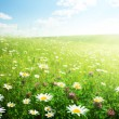 Field of wild flowers — Stock Photo #4622049