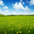 Field of spring flowers and sunny day — Stock Photo