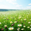 Field of wild flowers - 图库照片
