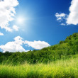 Stock Photo: Green grass and sunny day