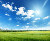 Oat field and sunny sky — Stockfoto