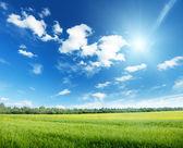 Oat field and sunny sky — Stock Photo