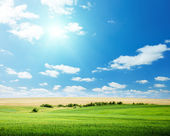 Oat field and sunny sky — Stock Photo