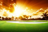 Sunset on golf field — 图库照片
