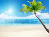 棕榈和海 — 图库照片