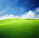 Campo verde e l'azzurro del cielo — Foto Stock