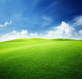 Green field and blue sky — ストック写真