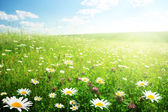 Field of wild flowers — Stock Photo