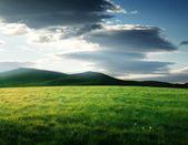 Field of grass in north mountain — Stock Photo