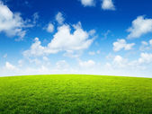 Green field and sunny day — Stock Photo