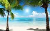Las palmas y el mar — Foto de Stock