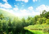 Lake in deep forest — Zdjęcie stockowe