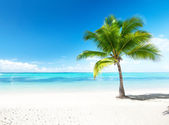 Palm e mar — Foto Stock