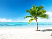 Palm en zee — Stockfoto