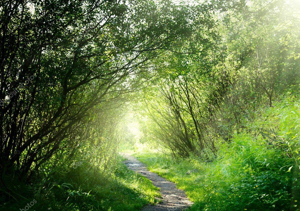 Фотообои Way in deep forest