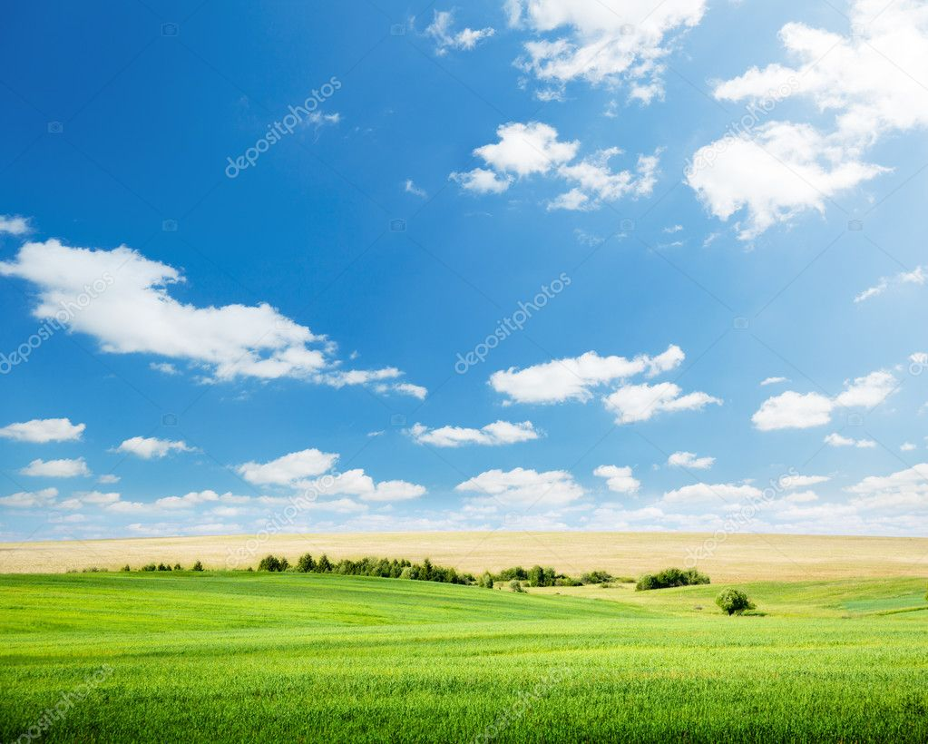 Oat field and sunny sky  Stock Photo #4621702