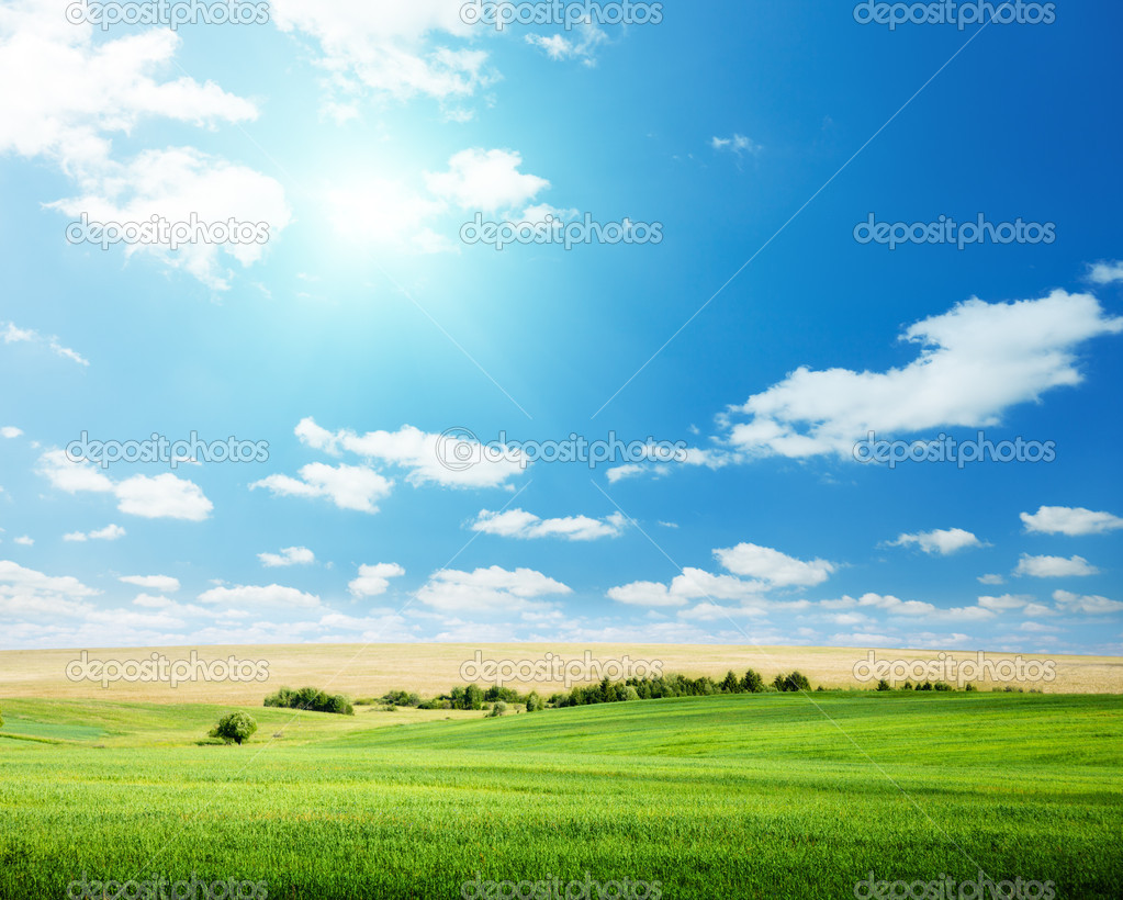 Oat field and sunny sky — Stock Photo #4621785