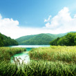 Lake in deep forest — Stock Photo #4776701