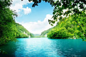 Lake in deep forest — Foto Stock