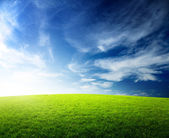 Field of grass and sunset — Stock Photo