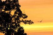 Złoty niebo wieczorem. — Zdjęcie stockowe